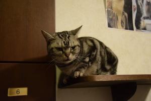Cat cafe (1)