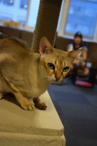 Cat cafe (4)