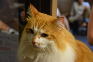 Cat cafe (5)