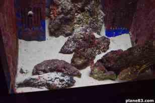 Aquarium (16)