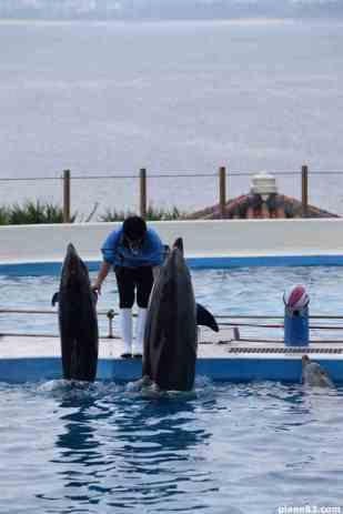 Delfin Show (1)