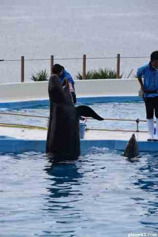 Delfin Show (2)