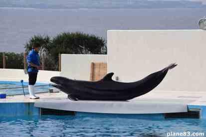 Delfin Show (3)