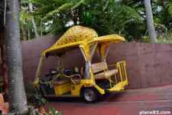 Pineapple Park (1)