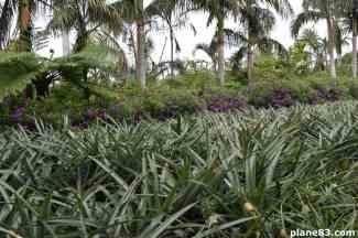 Pineapple Park (4)